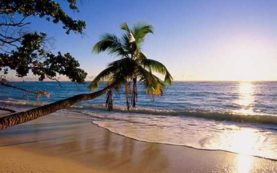 ocean, берег, palm, пляж, landscape, trees, tilt, природа,