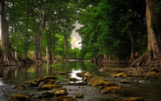 лес, природа, лесу, яndex, коллекция, коллекциях, леса, пользователя, качества, разными, видами,
