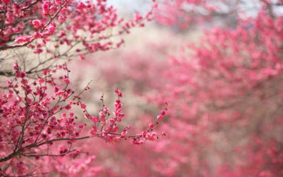 деревьев, когда, цветы