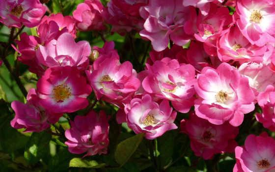 ría, imagenes, kwiaty