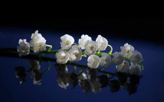 весна, цветы, красивые