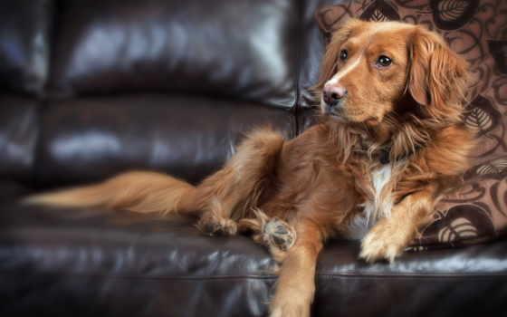 лохматый пес на диване