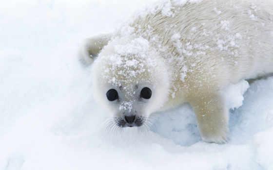 животных, детей, кратко, доступно, вопросы, ответы, зооклубе, zhivotnye, дети, занимательно, тюлень,