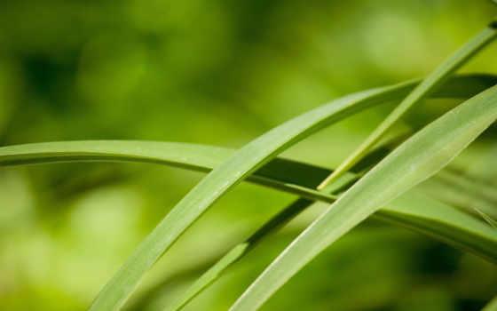 трава, травинки, макро, красивые, природа, янв, зелёный, листья, авы,