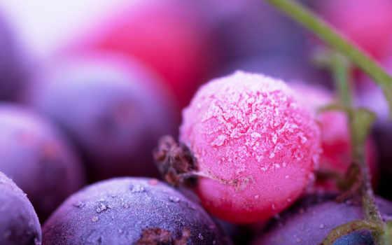 color, ягода, тенденции