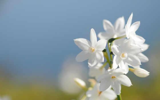 cvety, весна, небо, цветы, лепестки, white, поле, голубое, букет, макро, весенние,
