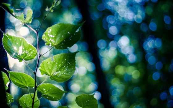 листва, зеленые, макро, природа, branch, капли, боке,