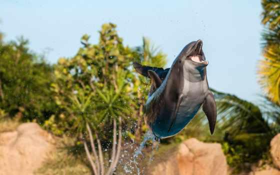 телефон, кот, море, прыжок, дельфины, дельфин, oblaka, дельфина,