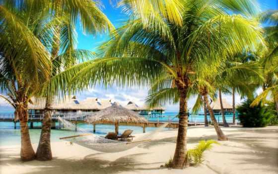 пальмы, пляжи, отдых, египетский, tropics, доминикана, seychelles, волк, туры, природа,