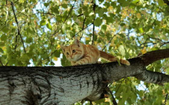 рыжий, котенок