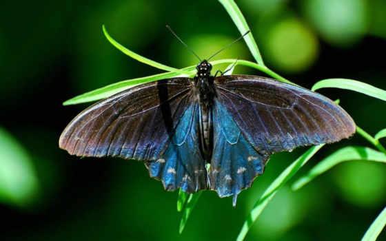 бабочка, трава