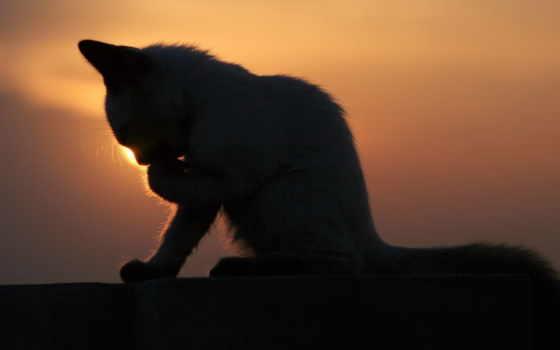 коты, фильм, кот