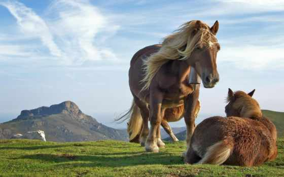 cavalos, facebook, para, контакте,