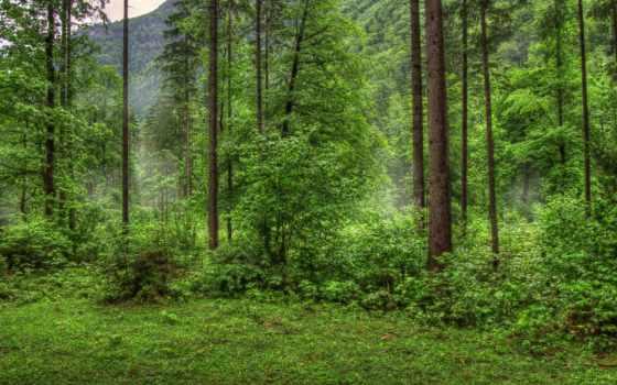 природа, лес, деревья, категории,