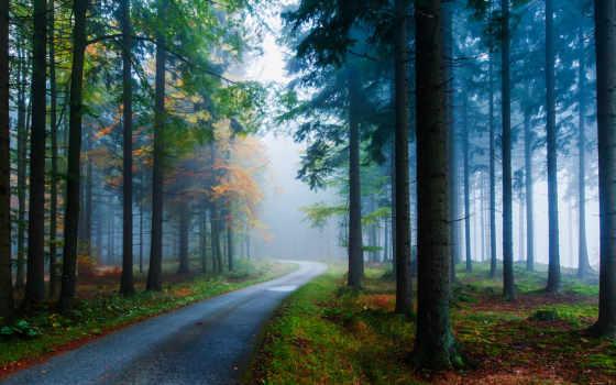 лес, природа, trees, дорога, туман, forests,