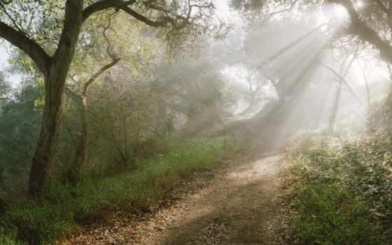 paisajes, сол, rayos, del, los, reflejos, manana, iluminando, caminso, bosques,
