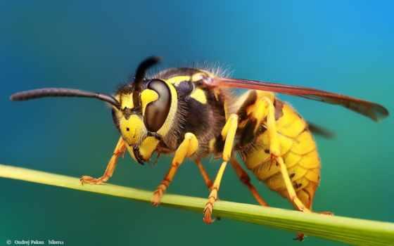 макро, views, creare, пчелка, web, din, online, продолжительность, watched, ago, лет,