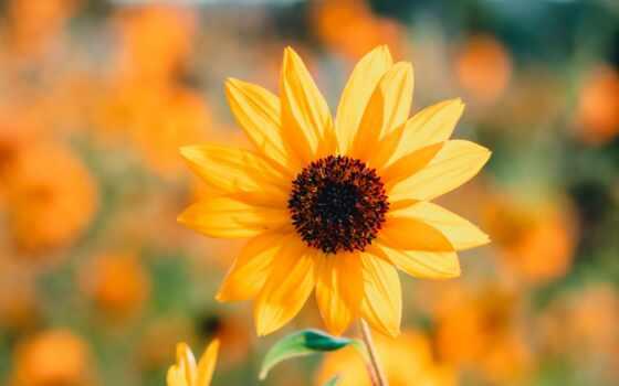 yellow, растение, see