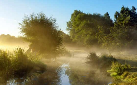 рассвет, туман, деревья