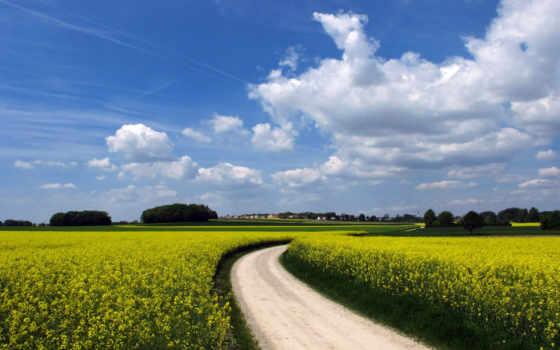 поле, деревня, landscape, дорога, рапс, oblaka, небо, rapeseed,