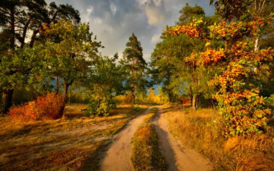 осень, лес, real, тона, miriadna, photography, фото, gallery, страница, природа,