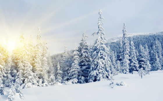 winter, sun, снег, широкоформатные, сосны, елки, eli, заснеженных,