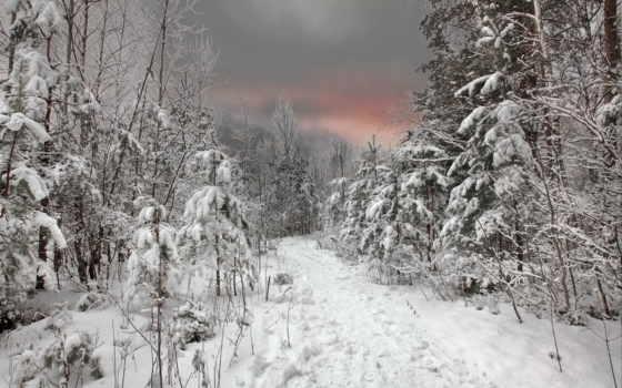 winter, снег, качестве, закат, высоком, хорошем, лес, нояб,