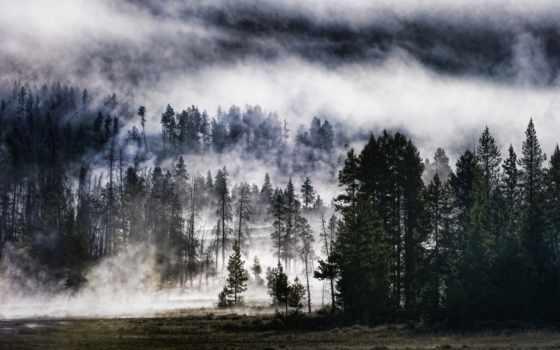 лес, природа, небо, foggy, лесу, тумане, совершенно, свой, wpapers,