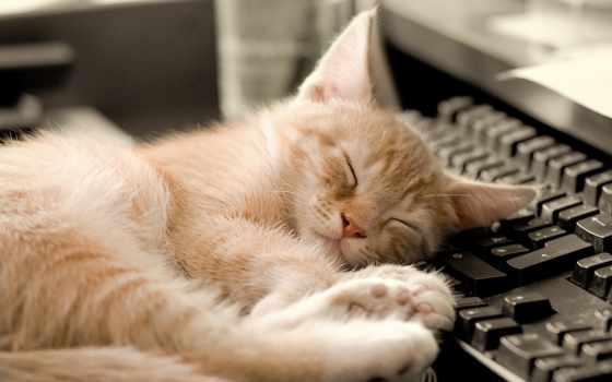 komputer, kot, коты