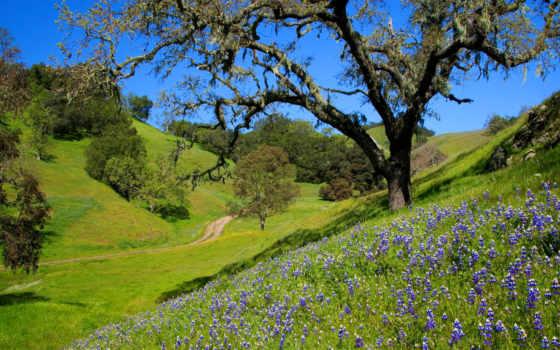 природа, картинка, луга, красивые, zoom, очень, trees,