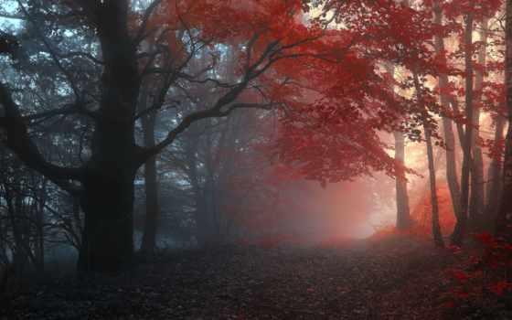 дорога, осень, full, лес, листва, туман, тумане, грунтовая, trees,