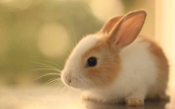 cute, bunny, bunnies, кролик, baby, you, pictures,