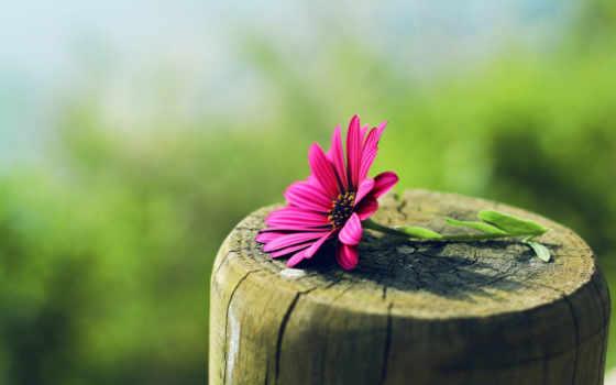 найти, телефон, cvety, регистрации, зелёный, лепестки, цветы, стебель, фотографий, красивые,