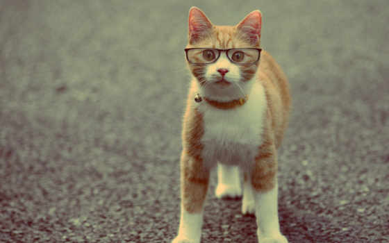 кот, умный, кота