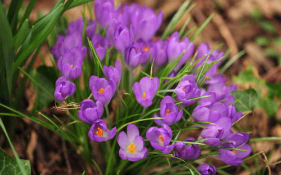 весна, природа, цветы Фон № 90162 разрешение 2560x1440