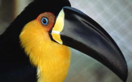 птица, клювом, большим