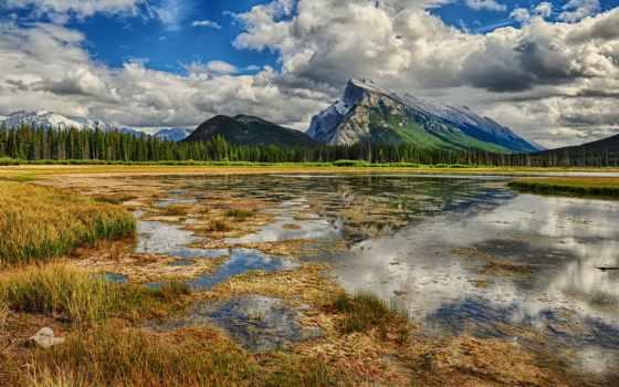 swamp, лес, весна, пейзажи -, пасмурно, trees, virtual, war, дневник, жюли,