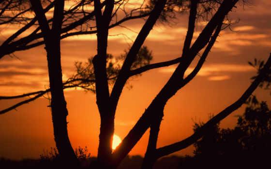 arbre, soleil, coucher, ciel, branch, images, оранжевый, couchage,