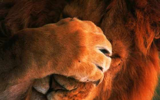 lion, funny,