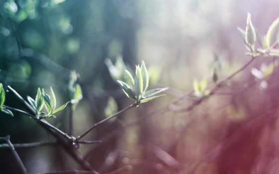 природа, листья, mobile, свет, high, free, branch,