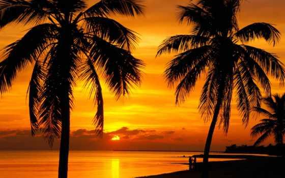 пальмы, закате, множество