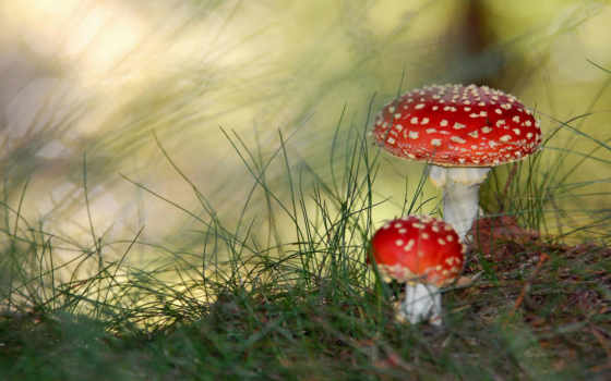 грибы, ядовитые, знать, грибов, нужно, mushroom, того, before, ядовитых, define,