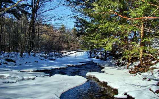 ручей, лес, река, весна, winter, hunting, весной, бобра, природа, снег,