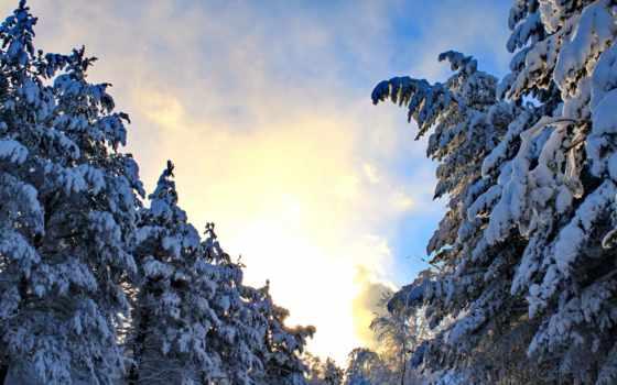 изображение, hintergrundbild, tapety, trees, природа, seasons, года, pulpit, darmowe, time,