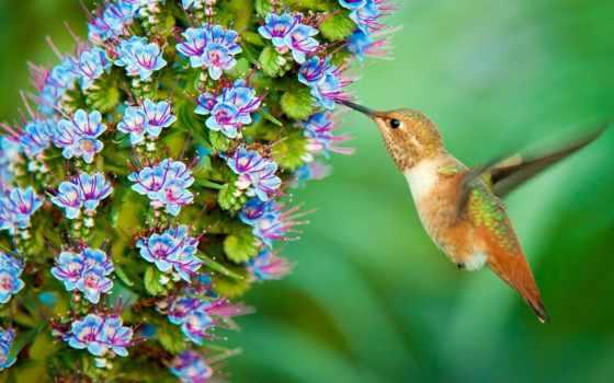 нектара, любители, важнейшим, является, связующим, звеном, совместной, ли, нектар, знаете,