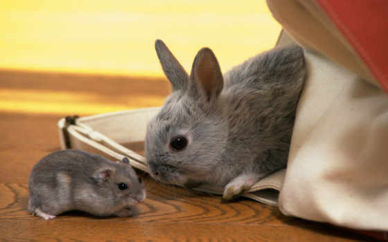 хомяк, кролик, серый