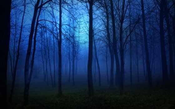 ночь, trees, лес, landscape, луна, fear, свет, darkness, лесу,