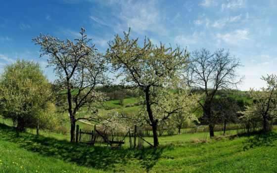 природа, музыка, relaxing, весна, trees, baby, royal, instrumental, piano, cvety,