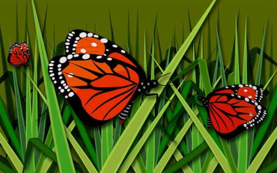 бабочки, страницу, бабочка