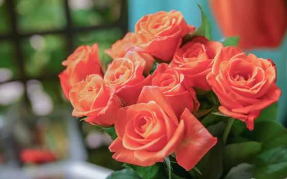 цветы, марта, широкоформатные